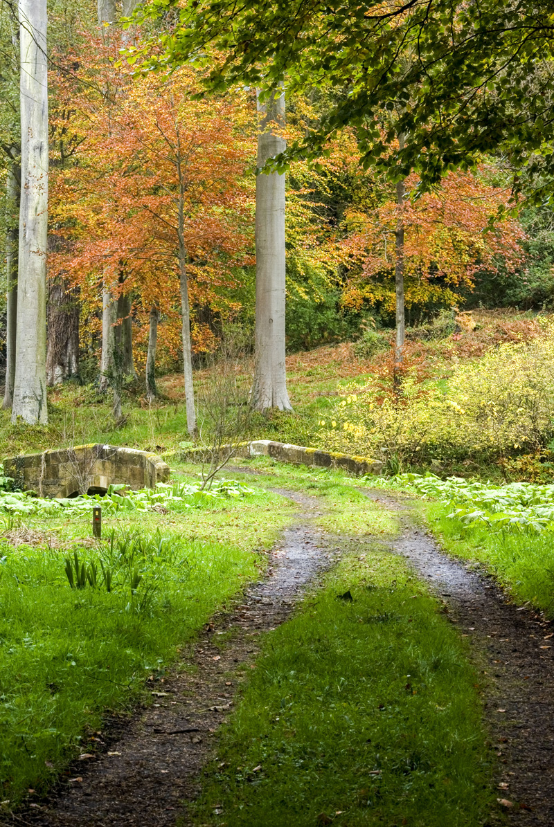 Woodland Walks in Northumberland at Howick Hall